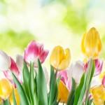 春が来たら油断は禁物! 今すぐ始めたい紫外線対策